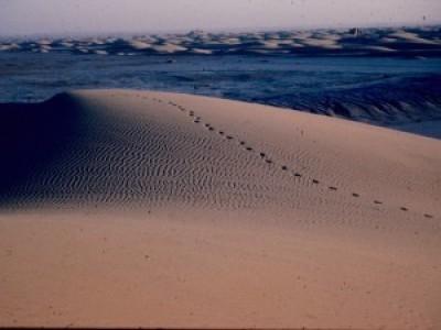 The dunes of Sar-o Tar, Afghanistan